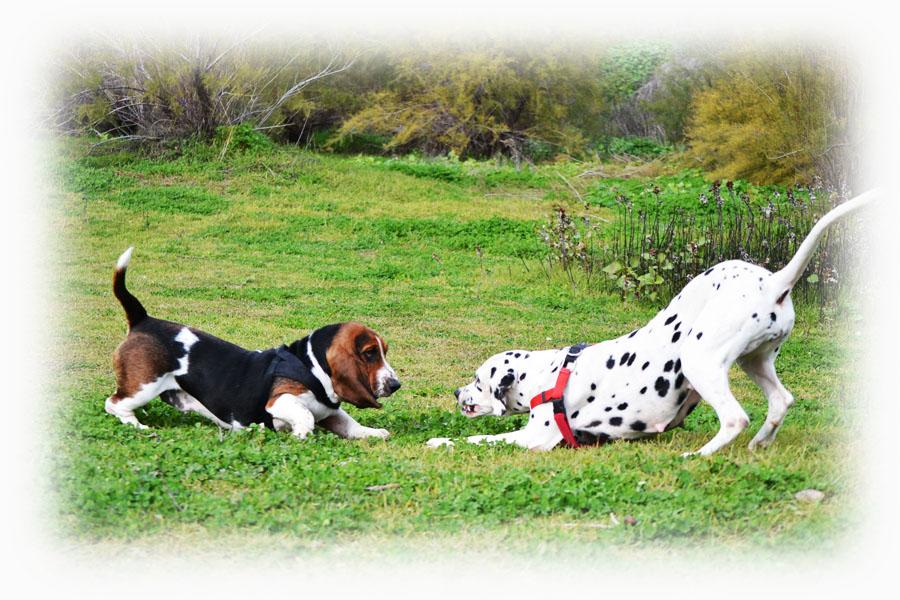 Adiestramiento Canino Granada - Senda Canina