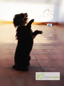 Adiestramiento canino Granada - Artículos Senda Canina