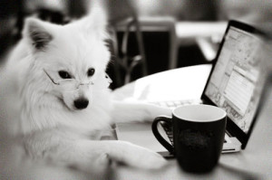 Adiestramiento Canino Granada - Formación Online Senda Canina