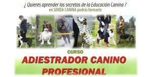 035cursoadiestrador1415
