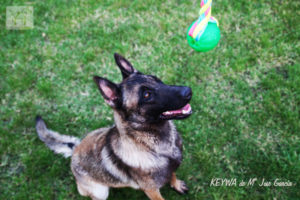 perro-pelota-1